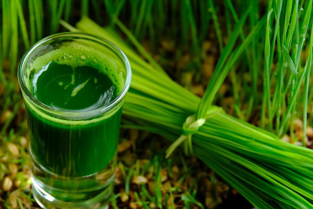 Nước ép cỏ lúa mì thanh lọc cơ thể