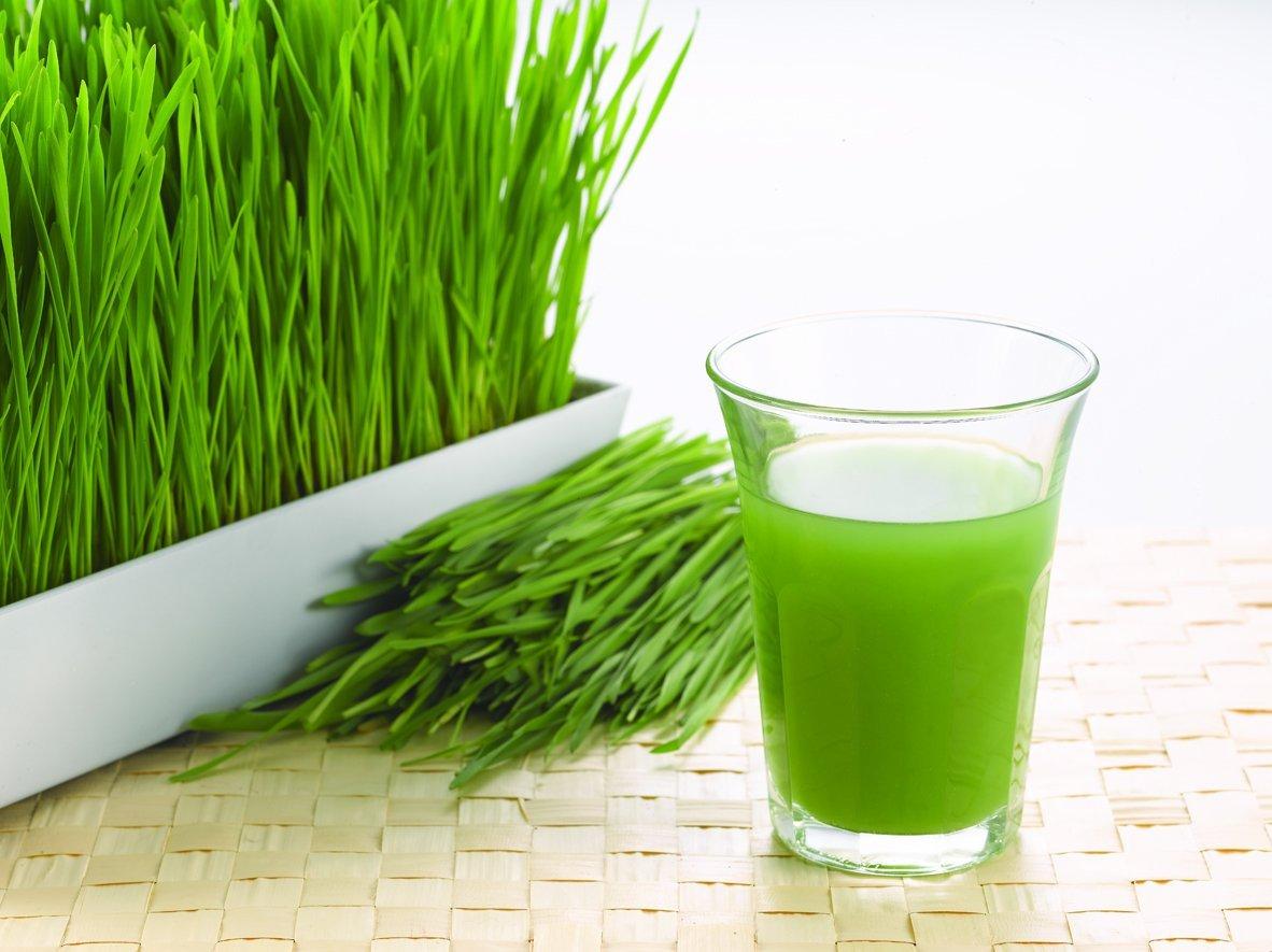 Vì sao sử dụng nước ép cỏ lúa mì hằng ngày